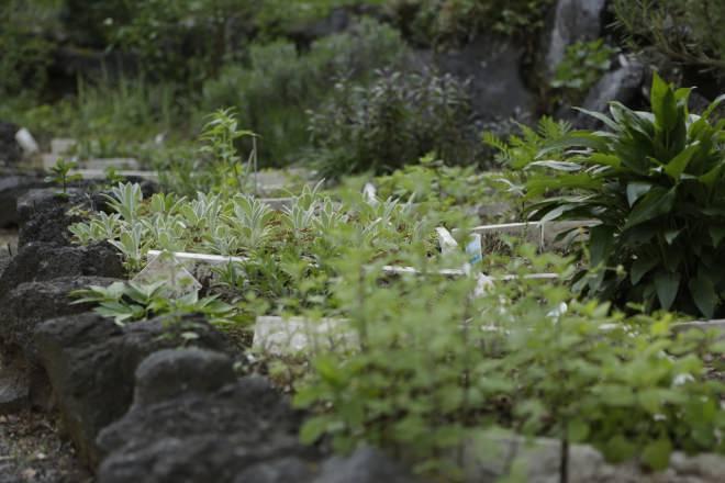 季節の花が咲くハーブガーデン