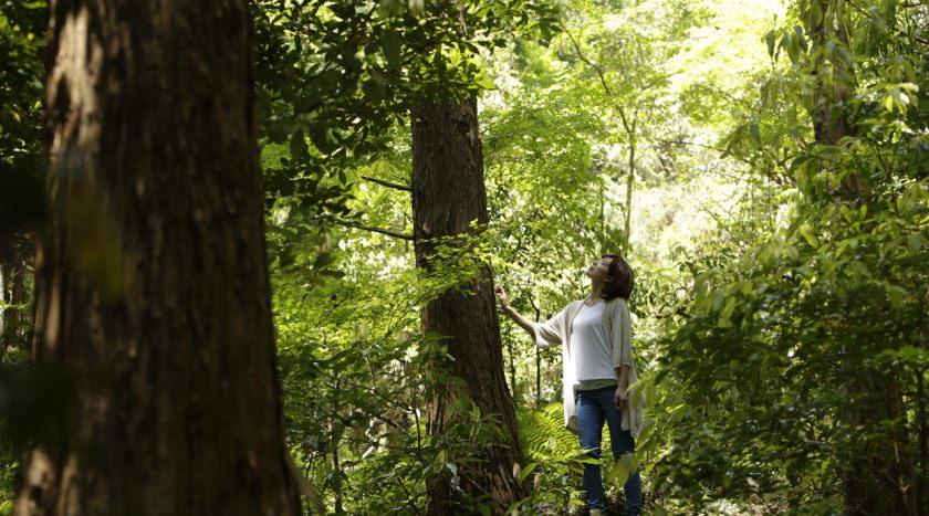 森のエネルギーを感じる