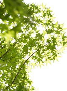 木の葉のきらめき
