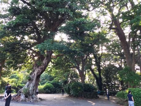 蓮着寺の森
