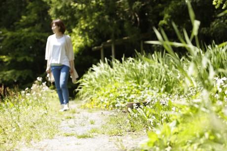 緑の中の散歩