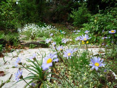 中庭の花壇
