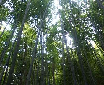 きれいな竹林