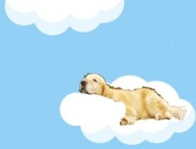 テラと雲1.jpg