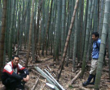 竹林の手入れ